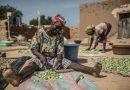 Burkina Faso: De petites subventions qui transforment le monde rural