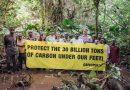 En violation de son propre moratoire, le gouvernement de RDC rétablit des concessions forestières illégales