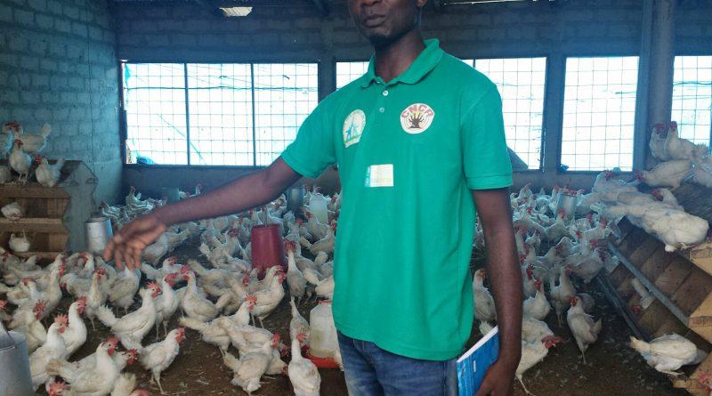 Au Sénégal, les aviculteurs craignent d'être les dindons de la farce