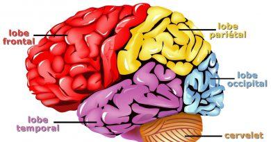 «On n'utilise que 10% de nos capacités»: 15 idées reçues sur le cerveau