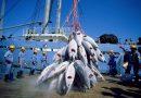Comment marchés financiers et multinationales accaparent aussi les mers et les océans