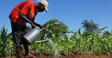 L'AGRICULTURE FAMILIALE EN AFRIQUE DE L'OUEST COMME SOLUTION À L'INSÉCURITÉ ALIMENTAIRE.