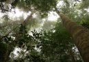 ETAT DES LIEUX DES FORÊTS FACE AU CHANGEMENT CLIMATIQUE EN AFRIQUE DE L'OUEST
