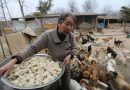 CHINE : LE FESTIVAL DE VIANDE DE CHIENS DE YULIN A DÉBUTÉ