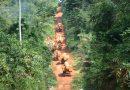 CAMEROUN: GREENPEACE DÉNONCE UN PROJET D'EXPLOITATION DE 68.000 HECTARES DE FORÊT VIERGE