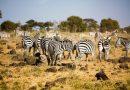 LES PARCS NATURELS AFRICAINS AU COEUR D'UN « COLONIALISME VERT », SELON UN HISTORIEN