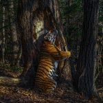 ET LES MEILLEURS PHOTOGRAPHES ANIMALIERS DE L'ANNÉE 2020 SONT…