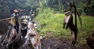 LA VIANDE DE SINGES, D'ANTILOPES OU DE PANGOLINS S'ARRACHE TOUJOURS EN RDC, MALGRÉ LES RISQUES DE MALADIE
