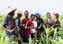 « FERME FACTORY », LA TÉLÉRÉALITÉ SÉNÉGALAISE AU PROFIT DE L'AGRICULTURE
